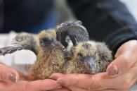 nieuw leven: duivenjongen