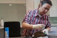 gewonde egel behandeling